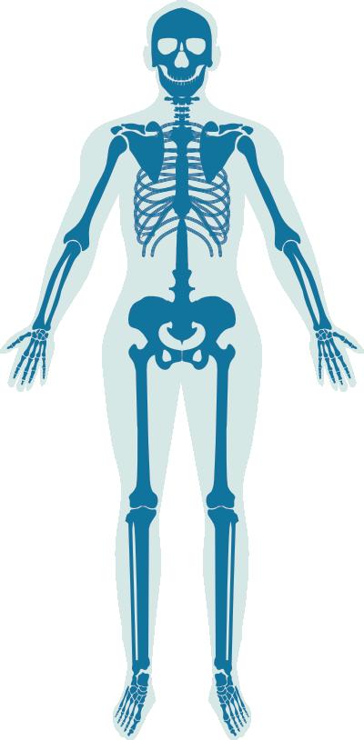 A csontizotóp vizsgálat során azt vizsgáljuk, hogy a csontvázrendszer mely részein dúsul az izotóp
